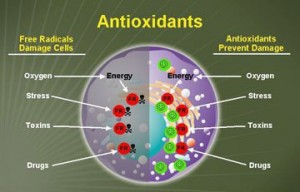 how-antioxidants-protect-cells