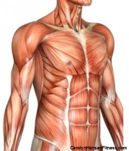ab muscles